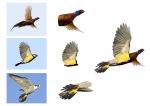 fugl collage 3